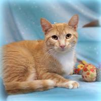 Adopt A Pet :: ERNIE - Slinger, WI