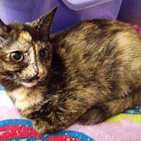 Adopt A Pet :: Lia - Columbus, OH