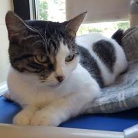 Adopt A Pet :: Kiwi Rose Lee - Erie, PA