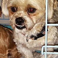Adopt A Pet :: Comet - Cary, NC