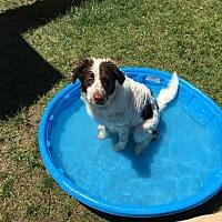 Adopt A Pet :: CO/WY/Belle - Walton, KY