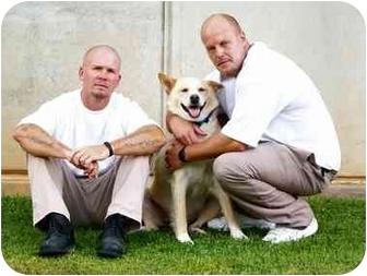 Husky/Labrador Retriever Mix Dog for adoption in Newland, North Carolina - Laddie (Trained)