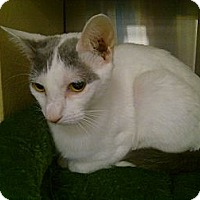 Adopt A Pet :: Kelli - Greenville, SC