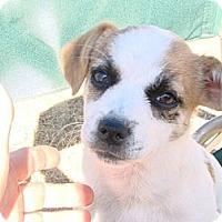 Adopt A Pet :: Terry - Phoenix, AZ
