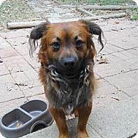 Adopt A Pet :: Rocko - Charlotte, NC
