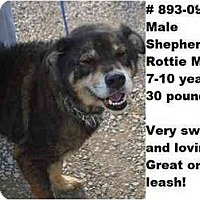 Adopt A Pet :: # 893-09 - RESCUED - Zanesville, OH