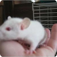 Adopt A Pet :: Minnie - Cincinnati, OH