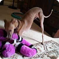 Adopt A Pet :: Mario - SD - Costa Mesa, CA