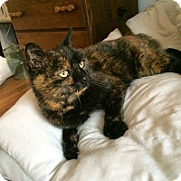 Adopt A Pet :: Harley - Colmar, PA
