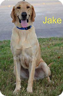 Labrador Retriever Mix Dog for adoption in Cat Spring, Texas - Jake