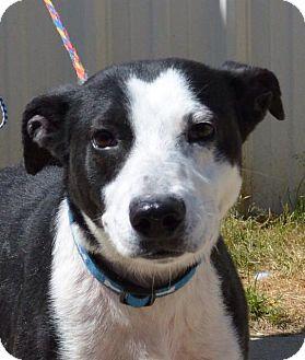 Labrador Retriever Mix Dog for adoption in Sturbridge, Massachusetts - Wiggles