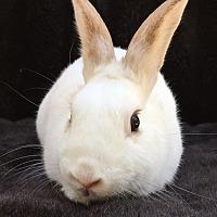 Adopt A Pet :: Flint - Watauga, TX