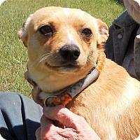 Adopt A Pet :: Parker - Siren, WI