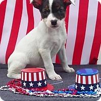 Adopt A Pet :: Livia - East Sparta, OH