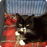 Adopt A Pet :: Podi - Freeport, NY