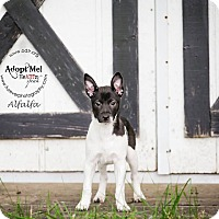 Adopt A Pet :: Alfalfa - Warsaw, IN
