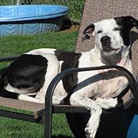 Adopt A Pet :: Nova - Princeton, NJ