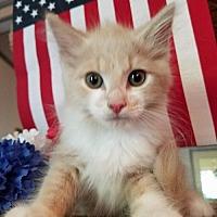 Adopt A Pet :: Dodge-Shelter - Rustburg, VA