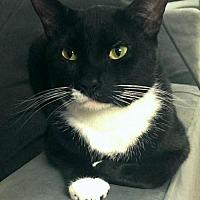 Adopt A Pet :: Sam - Herndon, VA
