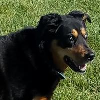Adopt A Pet :: Stevie Wonder - Carroll, IA