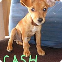 Adopt A Pet :: Cash - San Diego, CA