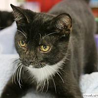 Adopt A Pet :: Napoleon - Westchester, CA