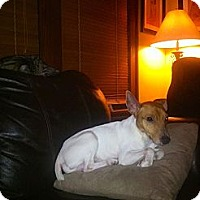 Adopt A Pet :: MILO - Prospect, CT