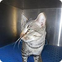 Adopt A Pet :: Conrad - white settlment, TX