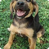 Adopt A Pet :: Roscoe - Plainfield, CT