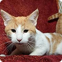 Adopt A Pet :: Butterscotch - New York, NY