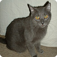 Adopt A Pet :: Frodo - Lenhartsville, PA