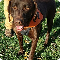 Adopt A Pet :: Grizzly - Manchester, NH