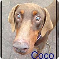 Adopt A Pet :: CoCo - Wichita, KS