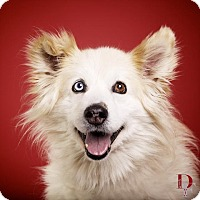 Adopt A Pet :: Woofie - Denver, CO