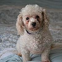 Adopt A Pet :: Zoe - Southington, CT