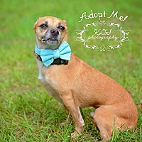 Adopt A Pet :: Niko - Fort Valley, GA