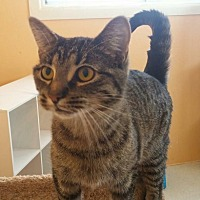 Adopt A Pet :: Bay - Port Clinton, OH