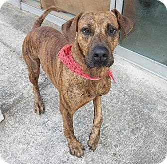 Hound (Unknown Type) Mix Dog for adoption in Hardeeville, South Carolina - Max