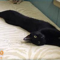 Adopt A Pet :: Gino - Metairie, LA