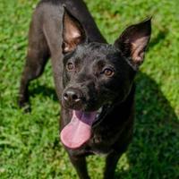 Adopt A Pet :: Melody - Greenwood, SC