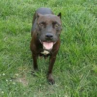 Adopt A Pet :: Cassody - Olathe, KS
