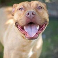 Adopt A Pet :: Anneliese - Davenport, IA
