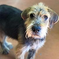 Adopt A Pet :: Jesse - Gilmer, TX