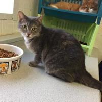 Adopt A Pet :: Olive - Belleville, ON