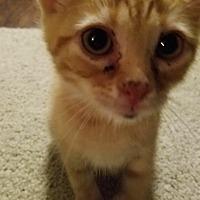 Adopt A Pet :: Georgia & Monty - Indianapolis, IN