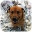 Photo 2 - Shepherd (Unknown Type)/Golden Retriever Mix Dog for adoption in Grafton, Ohio - Winny!