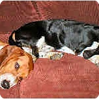 Adopt A Pet :: Arnold and Hudson - Phoenix, AZ