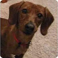Adopt A Pet :: Bow - Garden Grove, CA