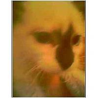 Adopt A Pet :: Donia - Owasso, OK