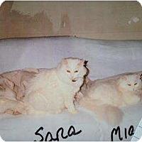Adopt A Pet :: Sara - Mobile, AL